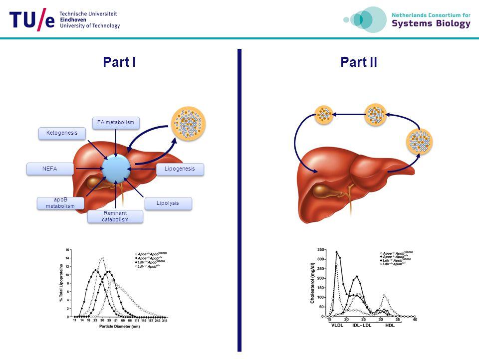 Liver Peripheral G3P Glycerol FA FA LPA FA PA MG FA DAG C FA FA FA FA