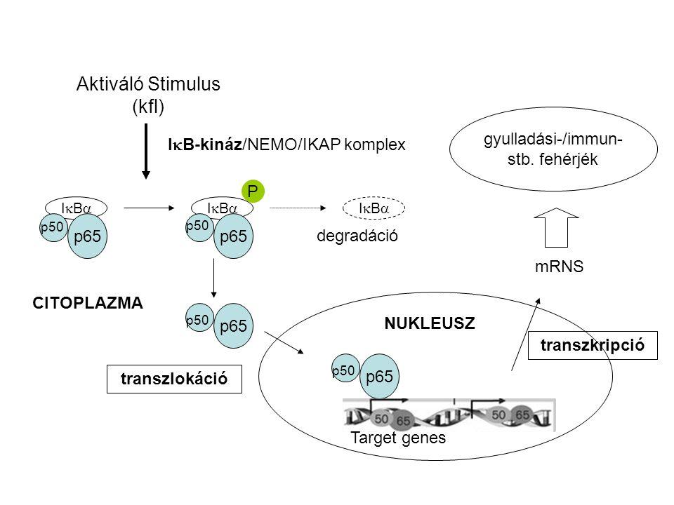 IkB-kináz/NEMO/IKAP komplex