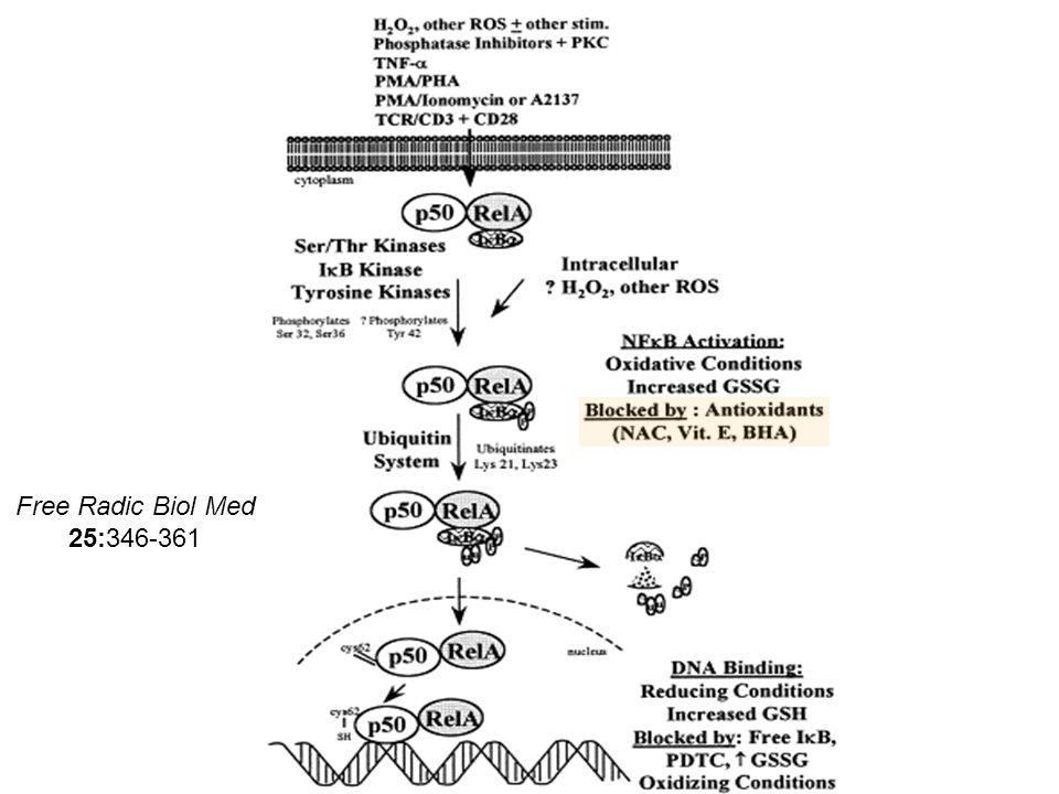 Free Radic Biol Med 25:346-361