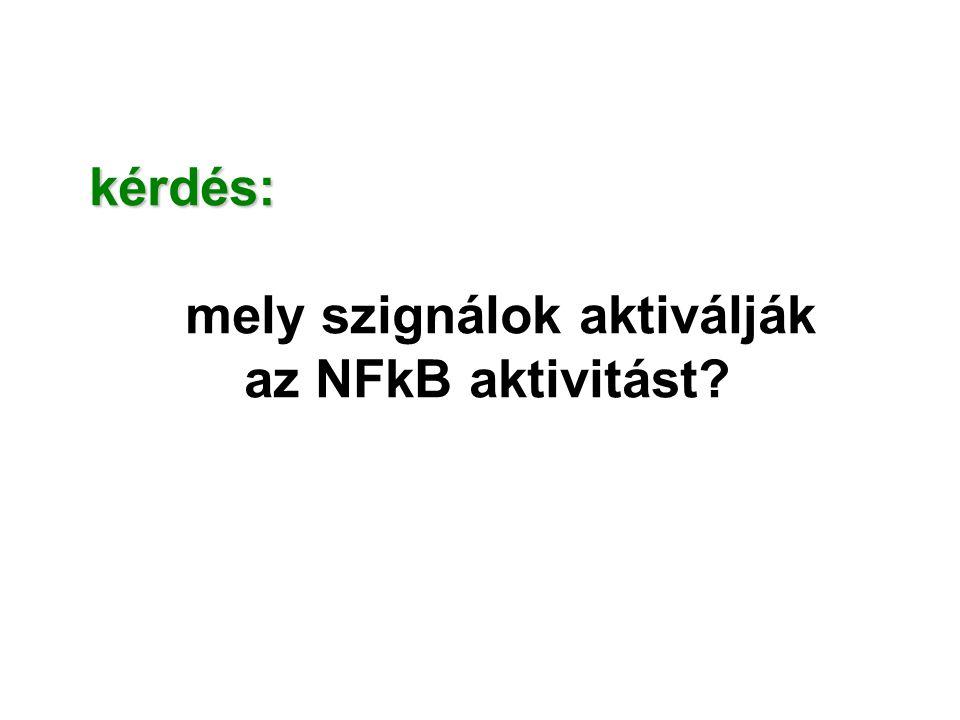 kérdés: mely szignálok aktiválják az NFkB aktivitást