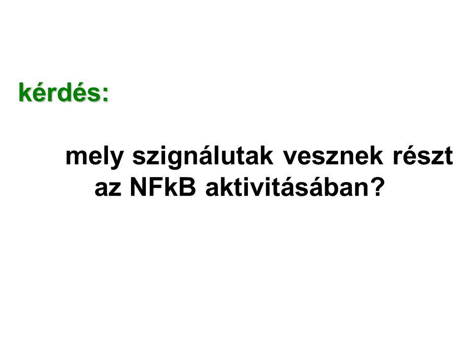 kérdés: mely szignálutak vesznek részt az NFkB aktivitásában