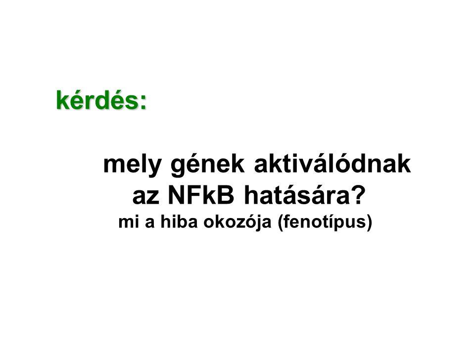 mely gének aktiválódnak az NFkB hatására