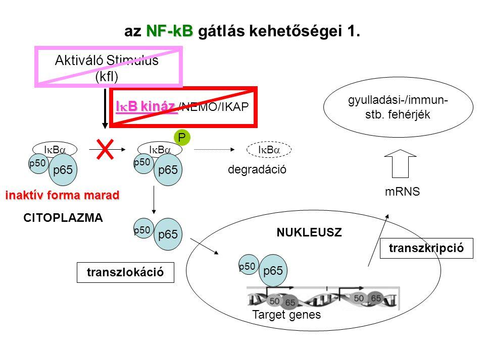 az NF-kB gátlás kehetőségei 1.