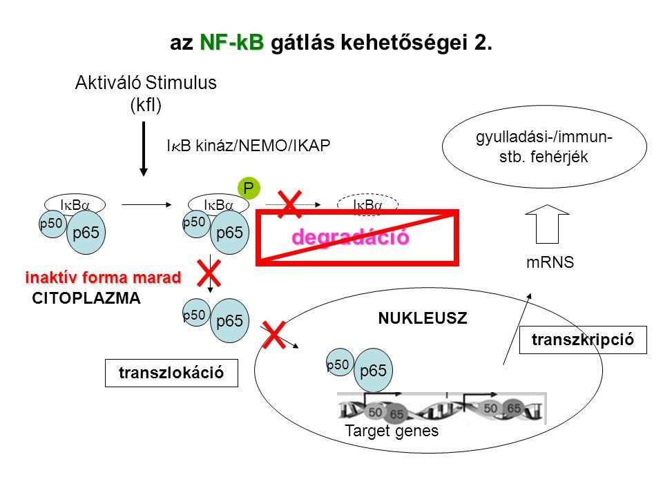 az NF-kB gátlás kehetőségei 2.