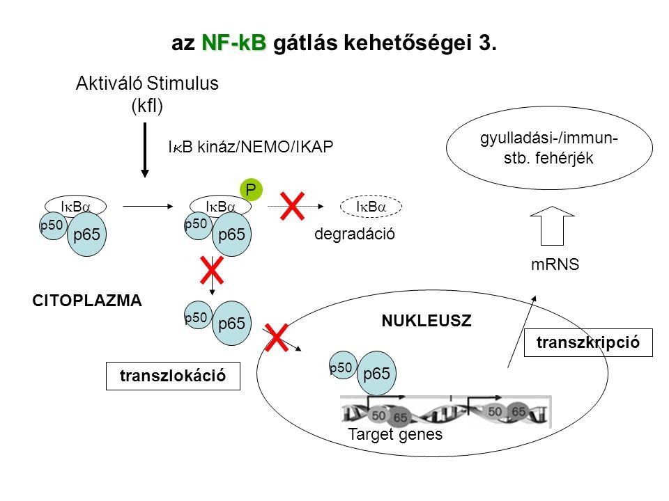 az NF-kB gátlás kehetőségei 3.