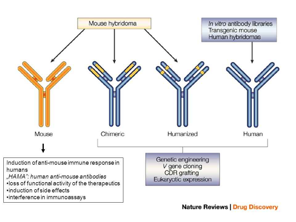 Induction of anti-mouse immune response in humans