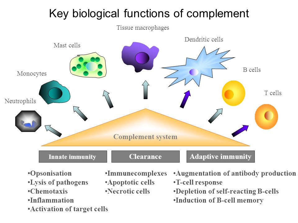 Key biological functions of complement