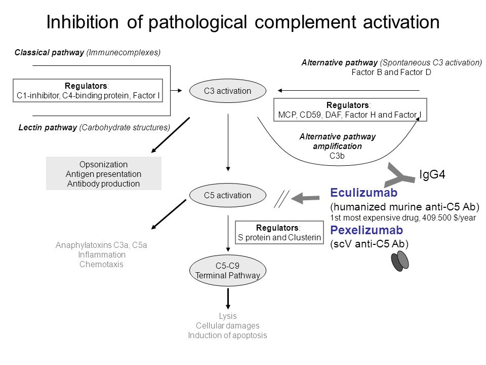 Y Inhibition of pathological complement activation IgG4 Eculizumab