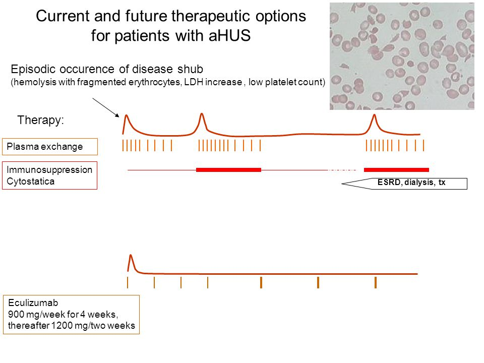 Current and future therapeutic options for patients with aHUS