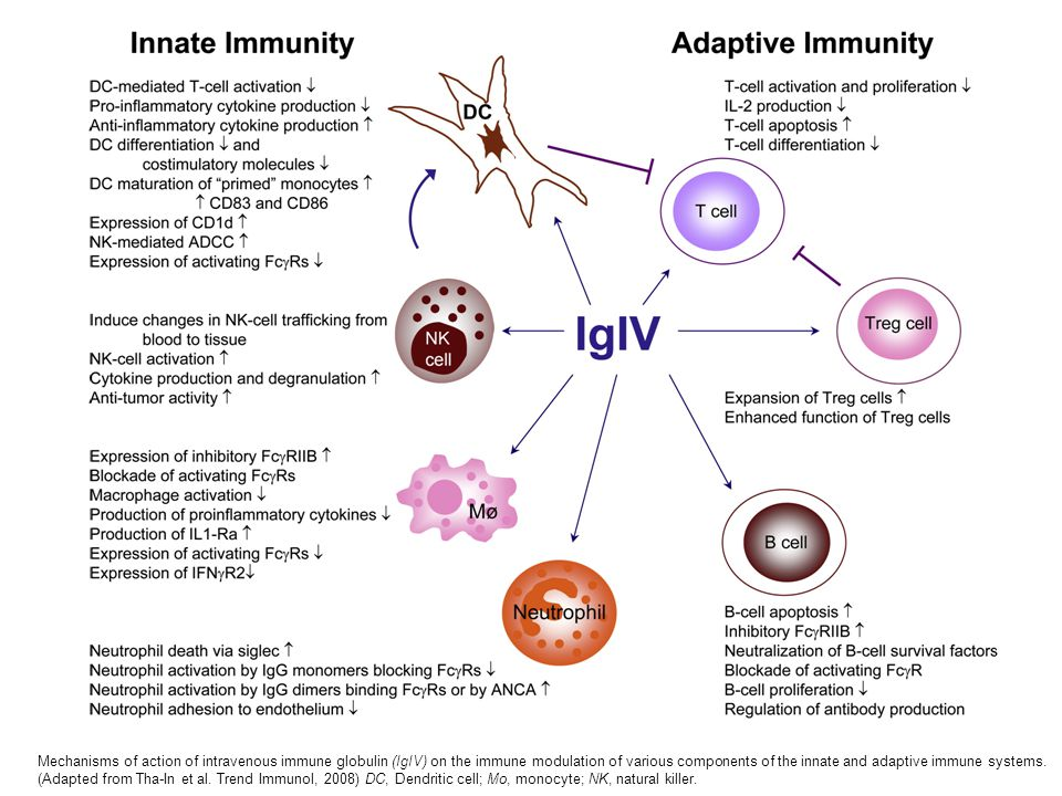Mechanisms of action of intravenous immune globulin (IgIV) on the immune modulation of various components of the innate and adaptive immune systems.