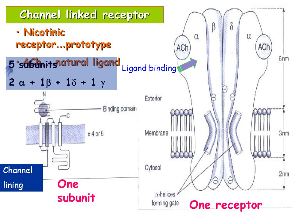 Channel linked receptor