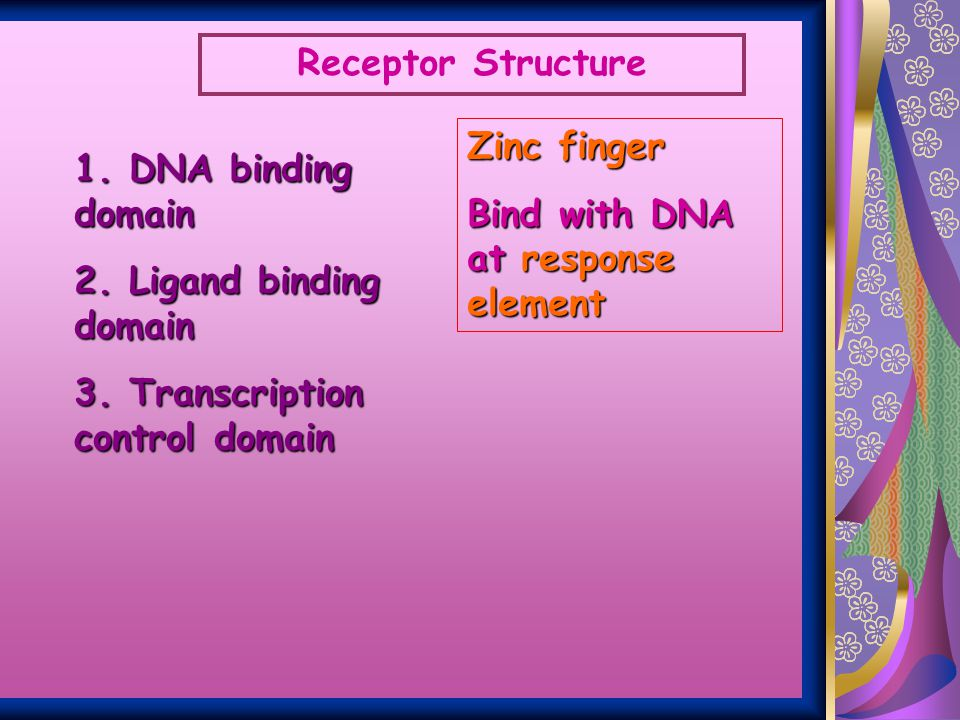 Receptor Structure Zinc finger. Bind with DNA at response element. 1. DNA binding domain. 2. Ligand binding domain.