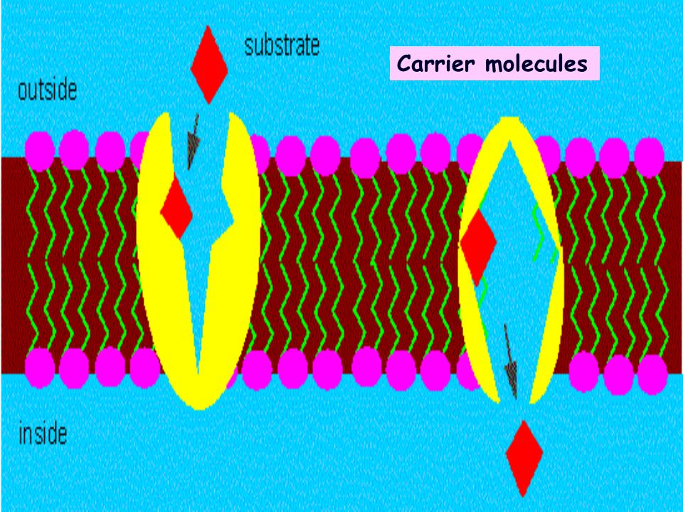 Carrier molecules