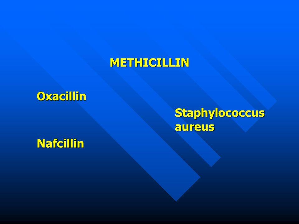 METHICILLIN Oxacillin Staphylococcus aureus Nafcillin