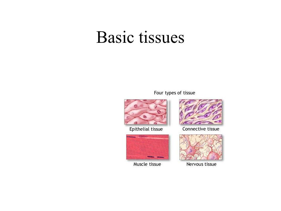 Basic tissues