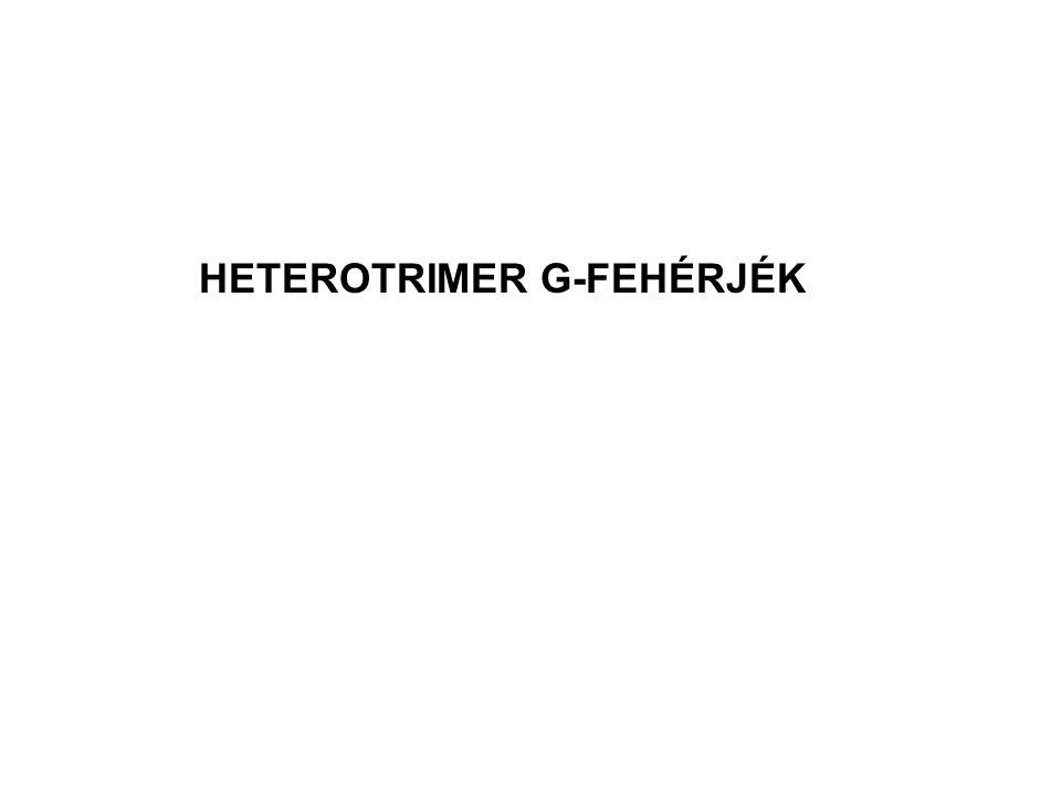 HETEROTRIMER G-FEHÉRJÉK