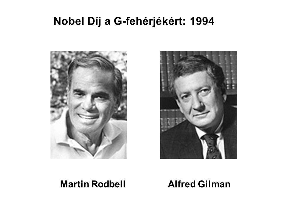 Nobel Díj a G-fehérjékért: 1994