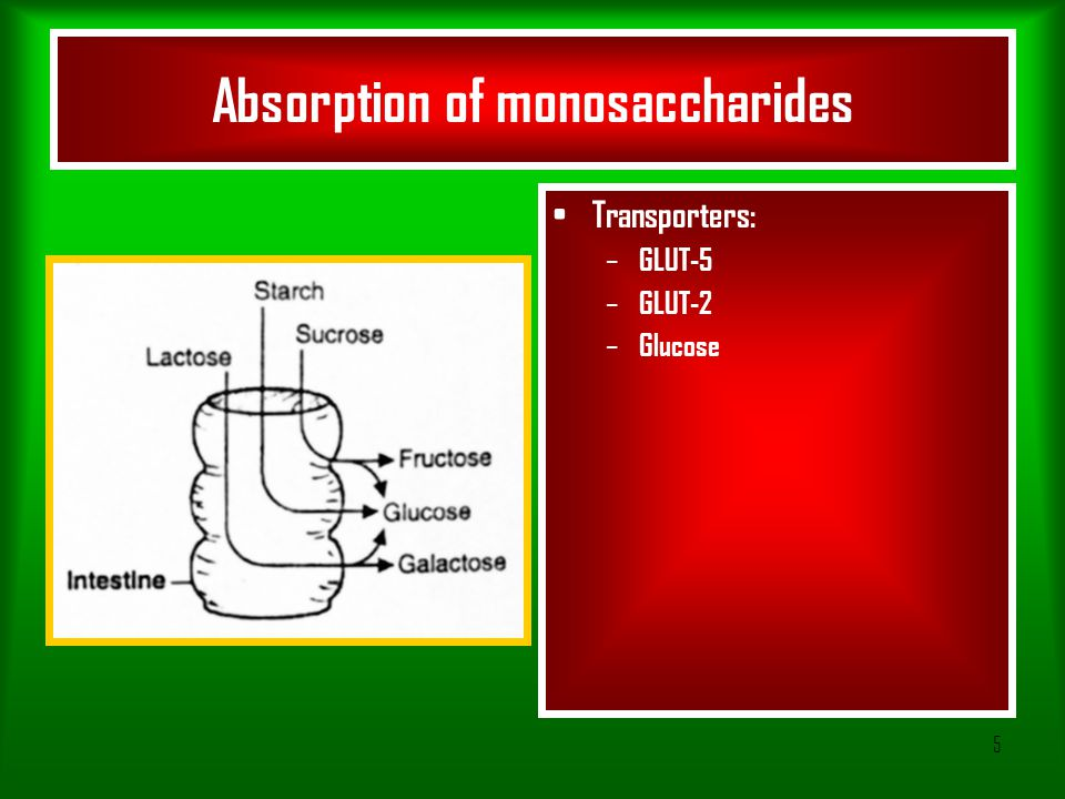Absorption of monosaccharides