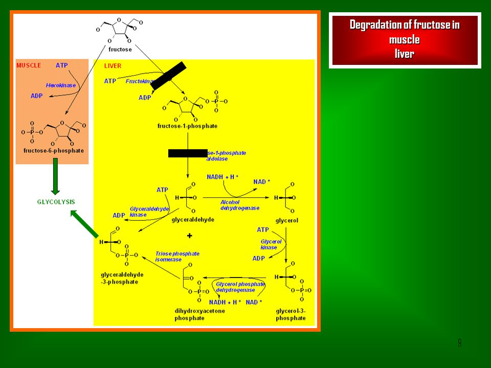 Degradation of fructose in