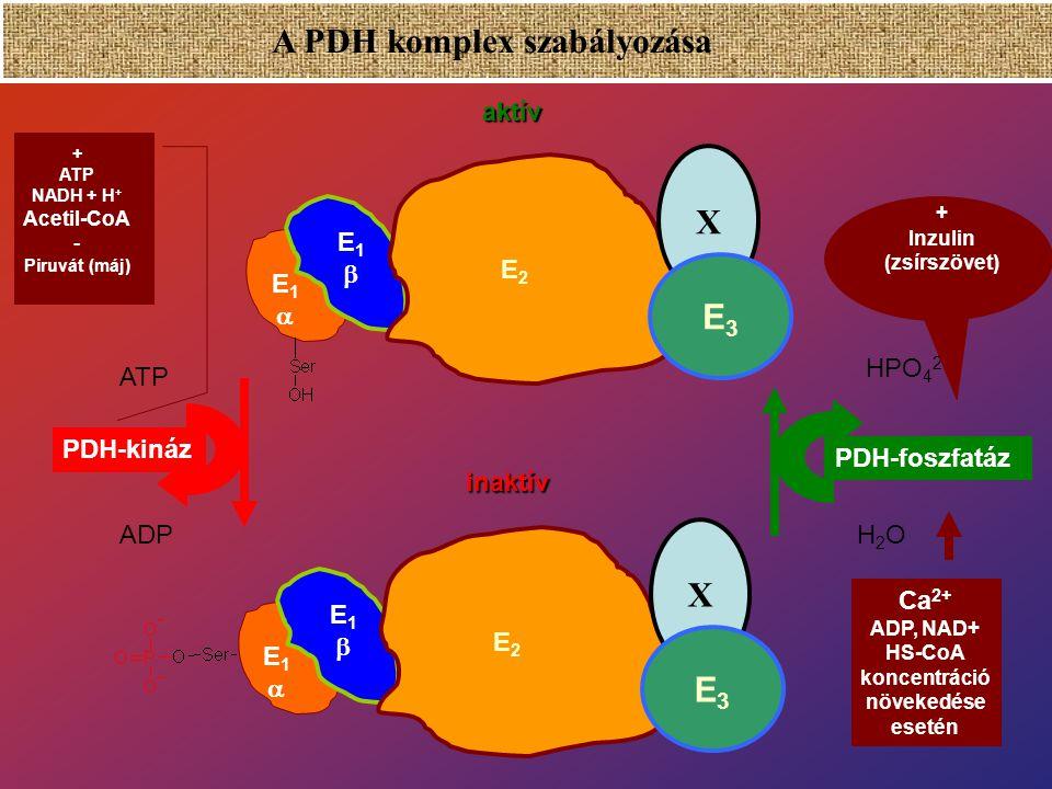 A PDH komplex szabályozása