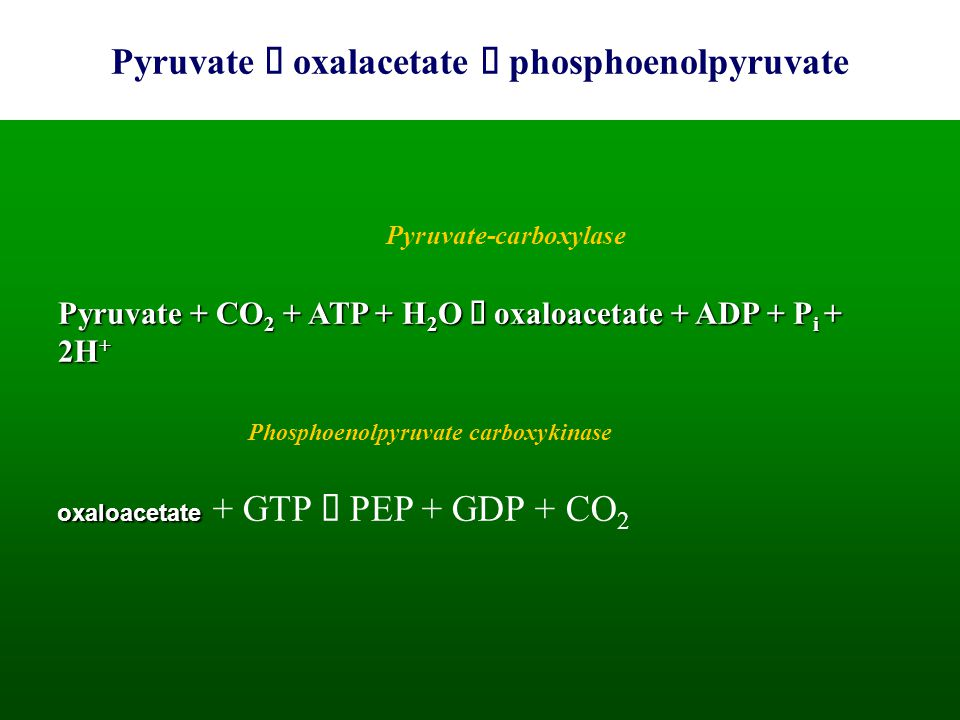 Pyruvate à oxalacetate à phosphoenolpyruvate
