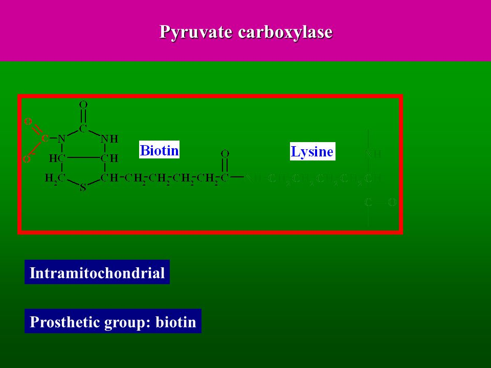 Pyruvate carboxylase Intramitochondrial Prosthetic group: biotin