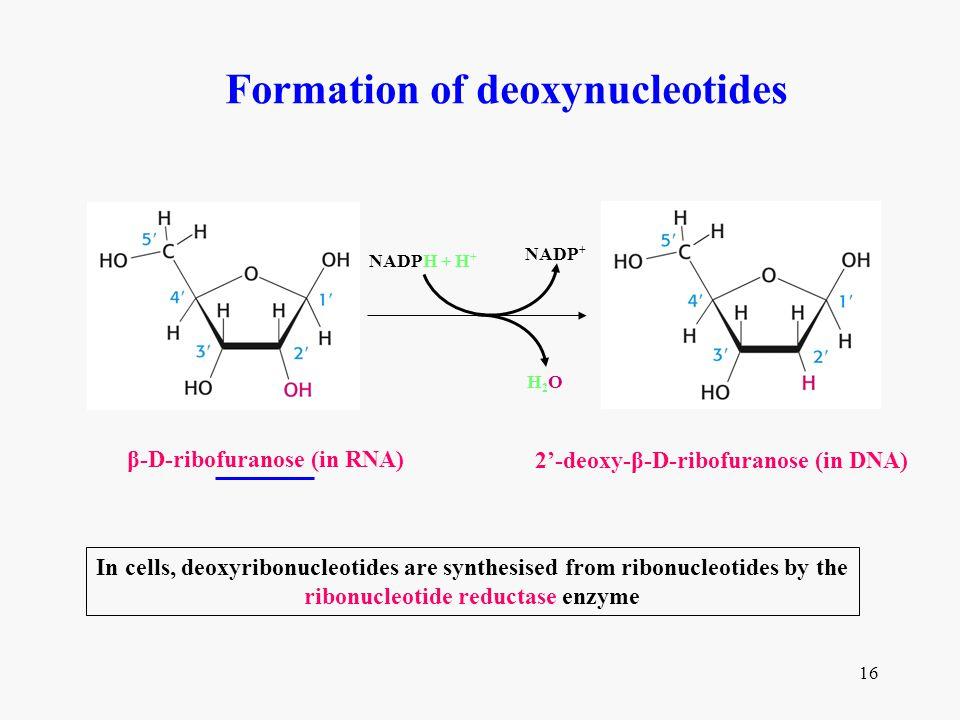 ribonucleotide reductase enzyme