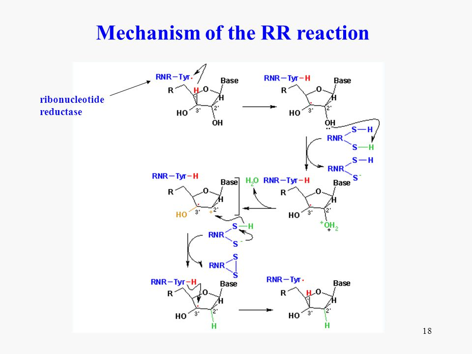 Mechanism of the RR reaction