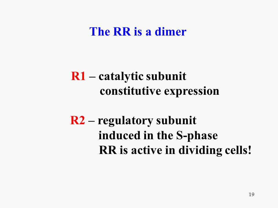 constitutive expression RR is active in dividing cells!
