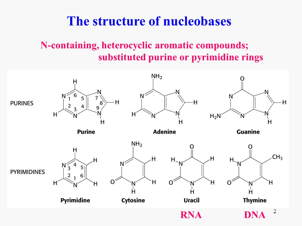 The structure of nucleobases