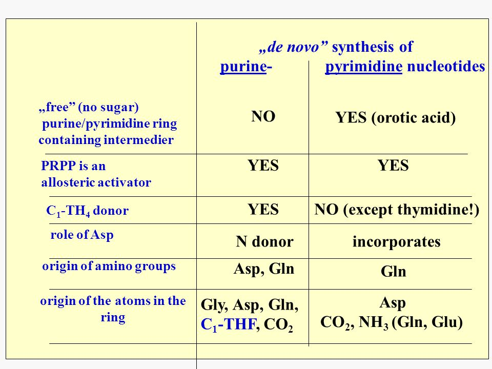 purine- pyrimidine nucleotides origin of the atoms in the ring
