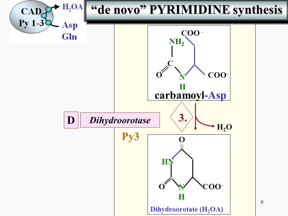 de novo PYRIMIDINE synthesis