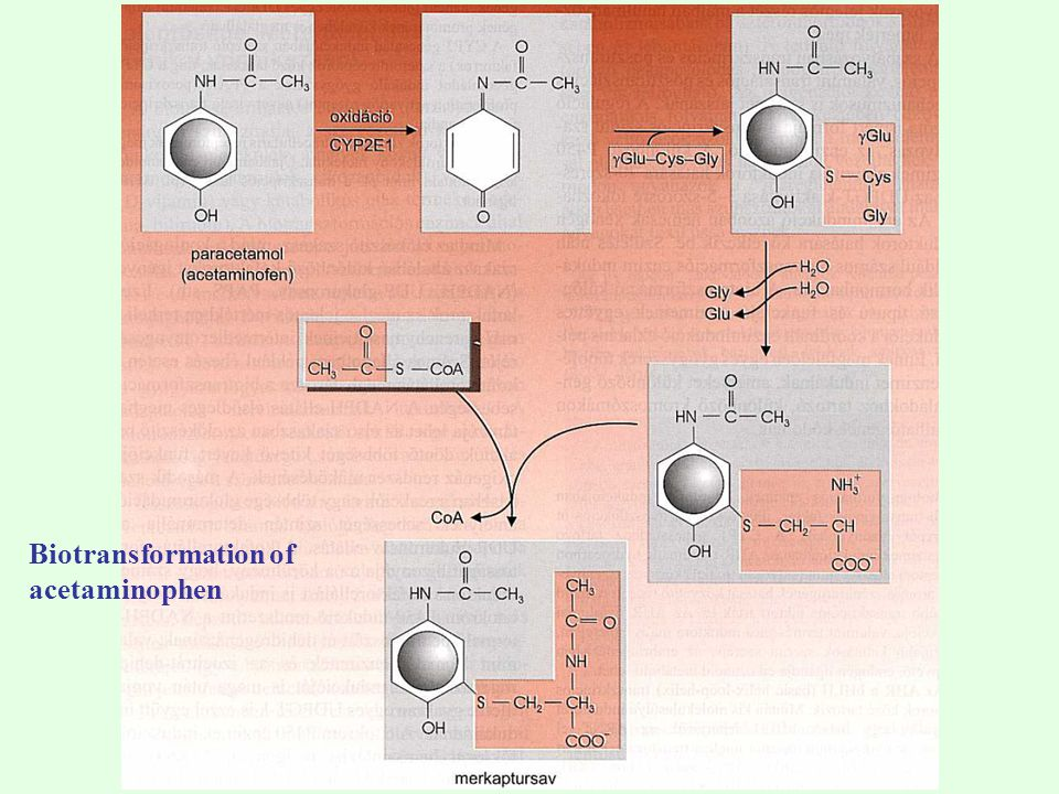 Biotransformation of acetaminophen