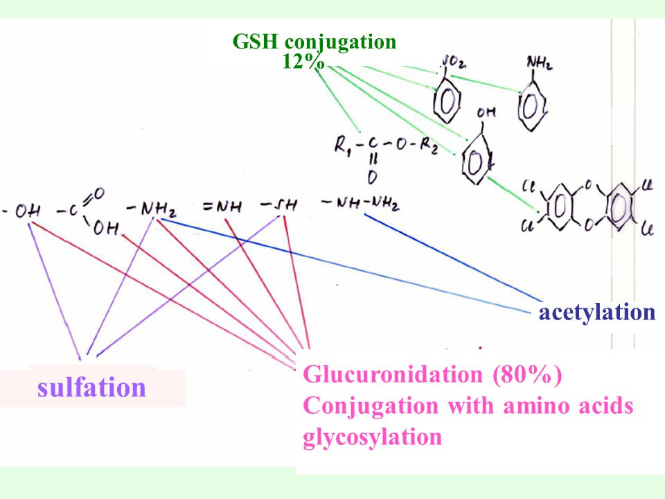 sulfation acetylation Glucuronidation (80%)