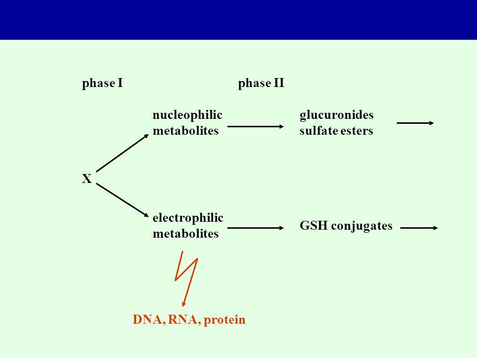 phase I phase II. nucleophilic. metabolites. glucuronides. sulfate esters. X. electrophilic. metabolites.