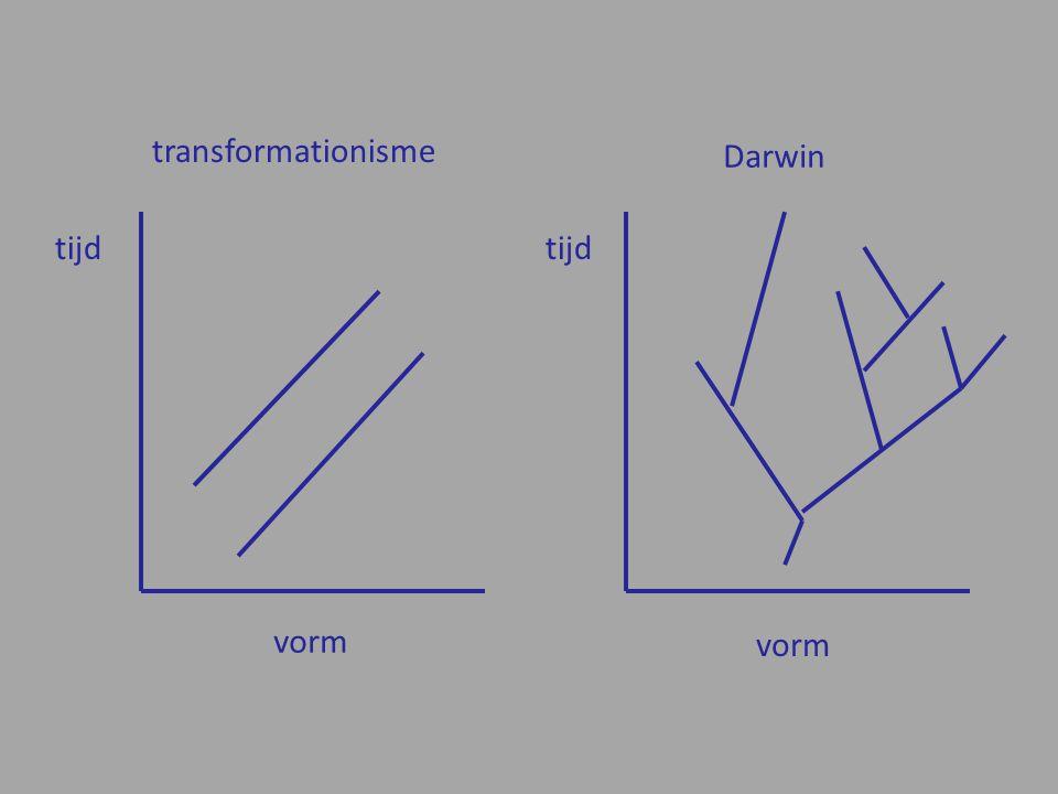 transformationisme tijd vorm Darwin tijd vorm