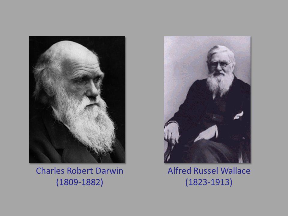 Charles Robert Darwin (1809-1882) Alfred Russel Wallace (1823-1913)