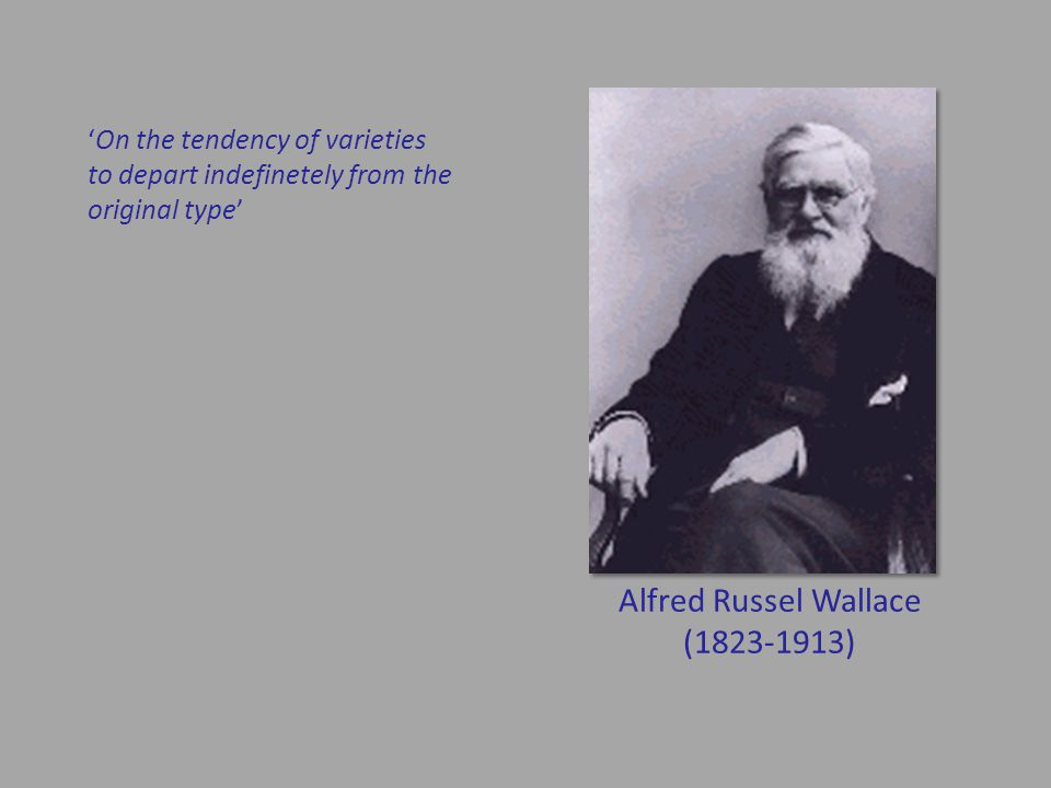 Alfred Russel Wallace (1823-1913) 'On the tendency of varieties