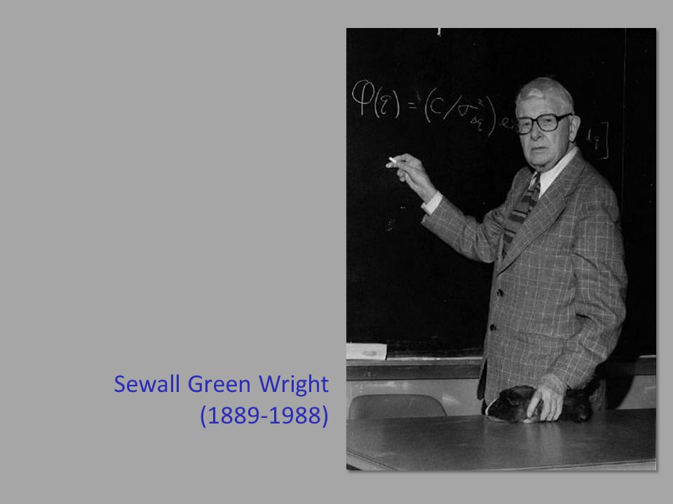 Sewall Green Wright (1889-1988)