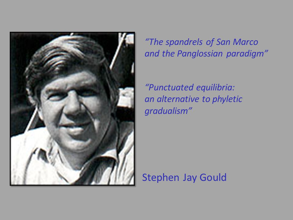 Stephen Jay Gould The spandrels of San Marco