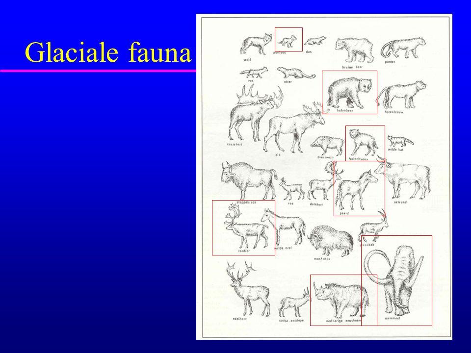 Glaciale fauna