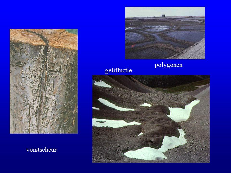 polygonen gelifluctie vorstscheur