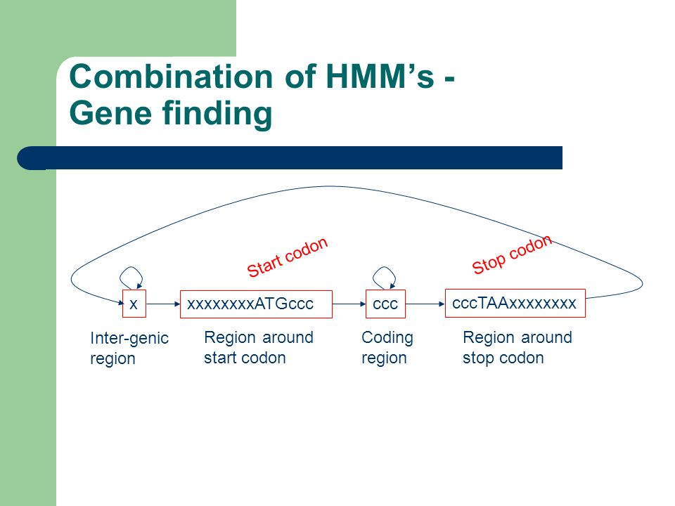 Combination of HMM's - Gene finding