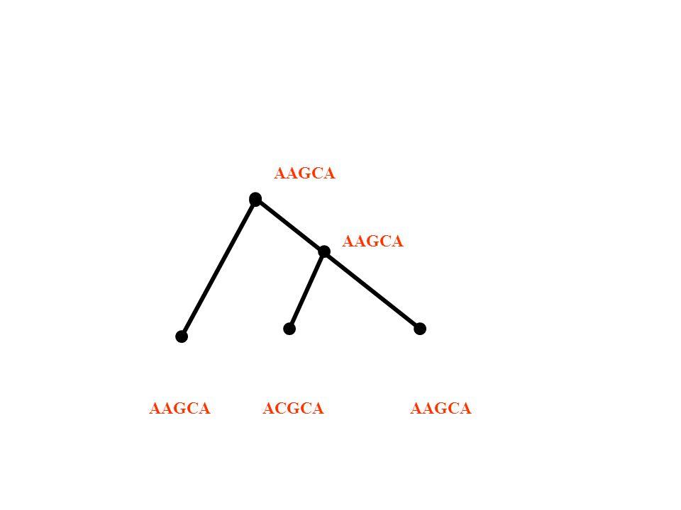 AAGCA ACGCA