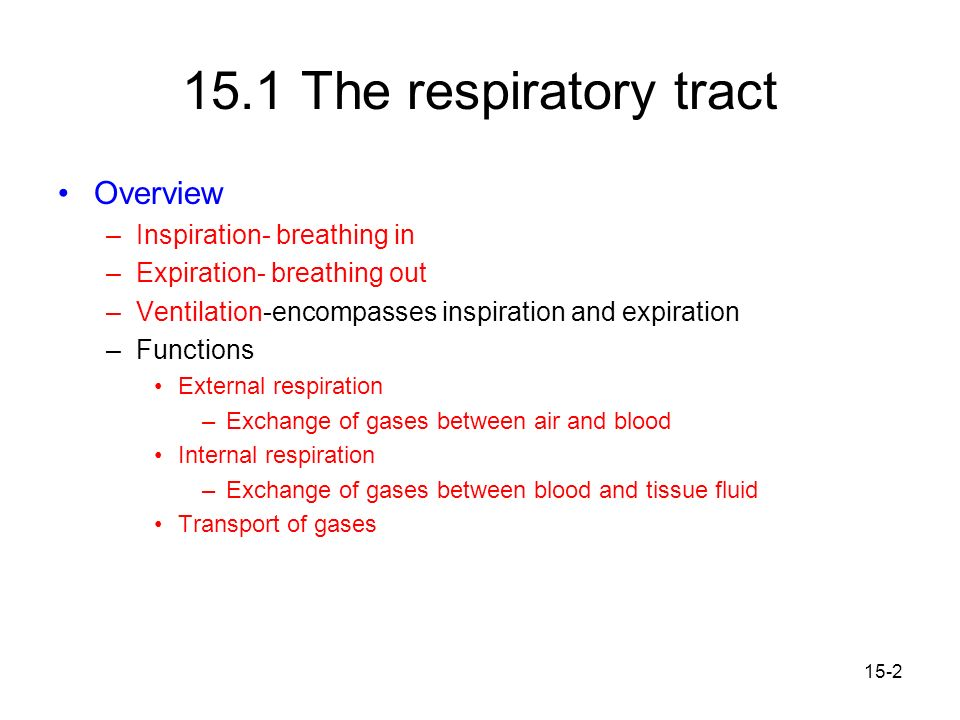 15.1 The respiratory tract Overview Inspiration- breathing in