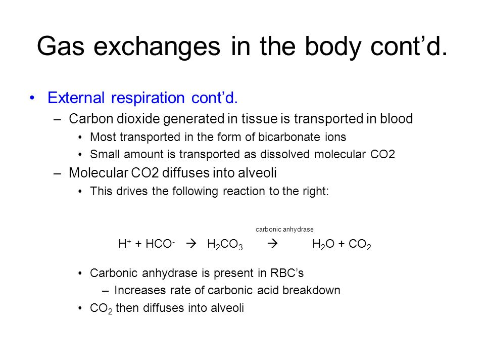 Gas exchanges in the body cont'd.