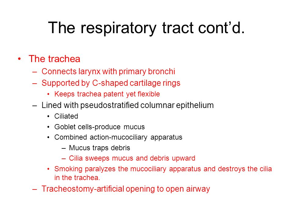 The respiratory tract cont'd.