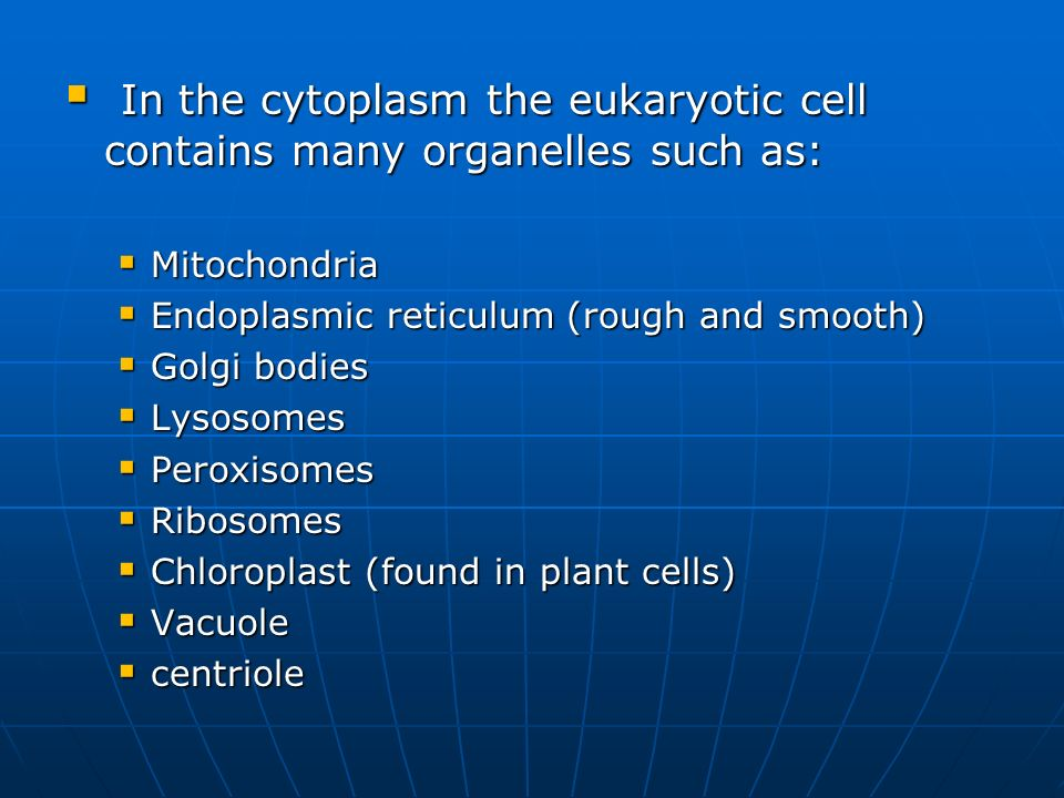 In the cytoplasm the eukaryotic cell contains many organelles such as: