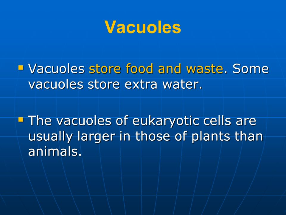 Vacuoles Vacuoles store food and waste. Some vacuoles store extra water.