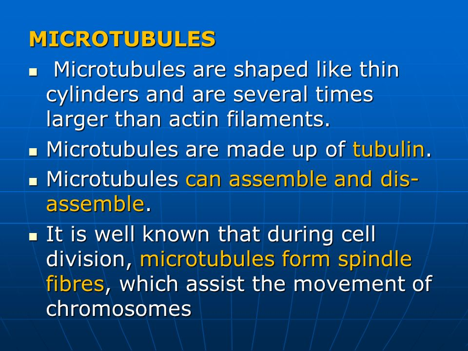 MICROTUBULES Microtubules are shaped like thin cylinders and are several times larger than actin filaments.